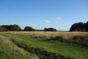 Sawyer's Hill in Richmond Park on sunny afternoon in October